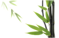 Bambù nero Fotografia Stock