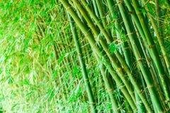 Bambù più forrest Fotografie Stock