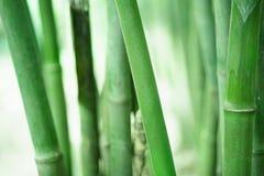 Bambù più forrest Immagini Stock