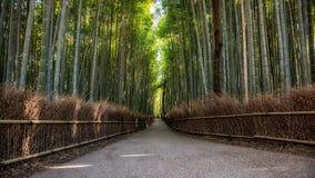 Bambù più forrest Immagine Stock Libera da Diritti