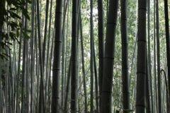 Bambù più forrest Immagine Stock