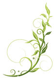 Bambù, pianta, confine Immagine Stock