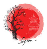 Bambù in sole rosso Fotografia Stock