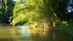 Bambù sopra il fiume fotografie stock libere da diritti