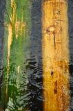 Bambù sotto acqua Fotografia Stock Libera da Diritti