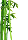 Bambù su bianco Fotografia Stock Libera da Diritti