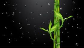 Bambù sul nero gocce sul nero illustrazione vettoriale