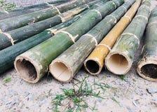 Bambù verde Fotografia Stock
