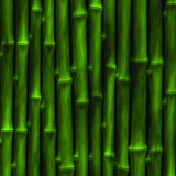 Bambù verde illustrazione di stock