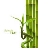 Bambù verde Immagine Stock