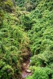 Bambù verde fertile Immagini Stock