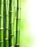 Bambú Foto de archivo
