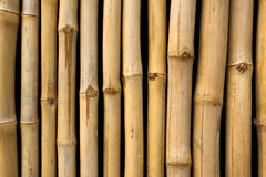 Bambú imágenes de archivo libres de regalías
