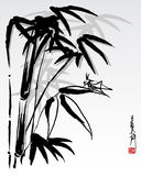 Bambú 4 Fotos de archivo libres de regalías