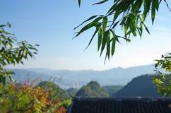 Bambú fotos de archivo libres de regalías