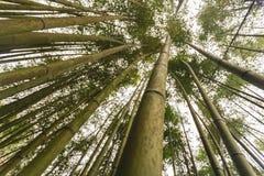 Bambú fotografía de archivo libre de regalías
