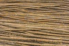 Bambú amarillo Fotos de archivo libres de regalías