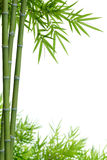 Bambú con las hojas Imagen de archivo libre de regalías
