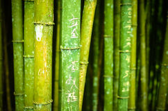 Bambú con los caracteres chinos Fotos de archivo
