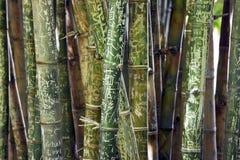 Bambú con nombres y la pintada Foto de archivo libre de regalías