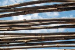 Bambú contra el cielo fotografía de archivo libre de regalías