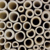 Bambú cortado Imagen de archivo