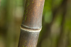 Bambú del bosque Imagen de archivo libre de regalías