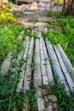 Bambú del puente en granja Fotos de archivo libres de regalías