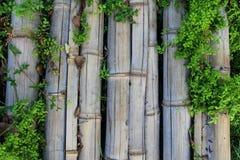 Bambú del puente en granja Foto de archivo libre de regalías