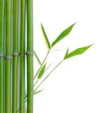 Bambú del zen Fotografía de archivo