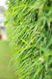 Bambú después de llover Imagen de archivo libre de regalías