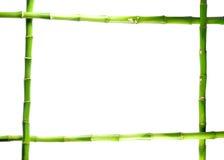 Bambú en el fondo aislado blanco Imagenes de archivo