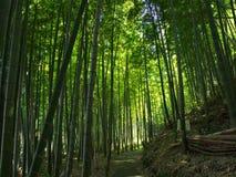 Bambú en el parque del castillo Imágenes de archivo libres de regalías