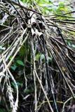 Bambú en el salvaje Imágenes de archivo libres de regalías