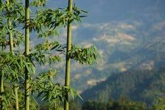 Bambú en las montañas Foto de archivo