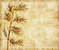 Bambú en vieja textura del papel del grunge Imagenes de archivo