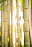 Bambú hermoso en línea vertical del arashiyama Foto de archivo libre de regalías