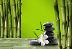 Bambú joven, verde en el boke del fondo Fotos de archivo