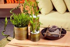 Bambú imagen de archivo