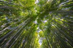 Bambú más forrest Foto de archivo libre de regalías