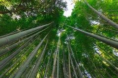 Bambú más forrest Imagen de archivo libre de regalías