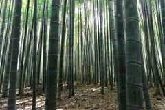 Bambú más forrest Imagenes de archivo