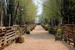 Bambú más forrest Imagen de archivo