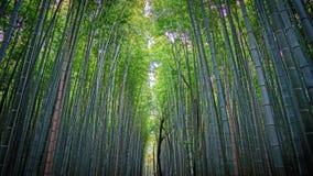 Bambú más forrest Fotografía de archivo libre de regalías