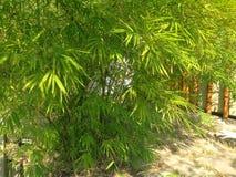 Bambú más forrest Imágenes de archivo libres de regalías