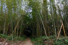 Bambú reservado de la montaña Imagenes de archivo