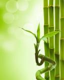 Bambú verde Foto de archivo libre de regalías