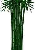 Bambú verde en primavera y otoño en el fondo blanco stock de ilustración