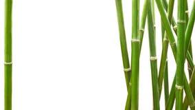 Bambú verde enmarcado en el fondo blanco con el espacio de la copia Foto de archivo libre de regalías