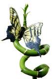 Bambú y mariposa verdes foto de archivo